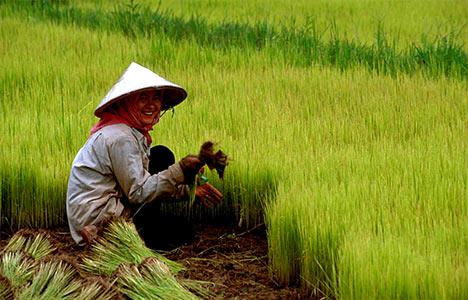 China_Rural
