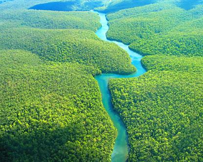 selva-amazonica