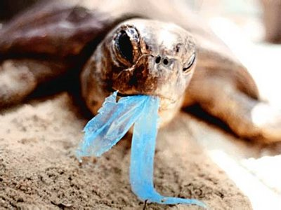 turtle-plastico-azul1