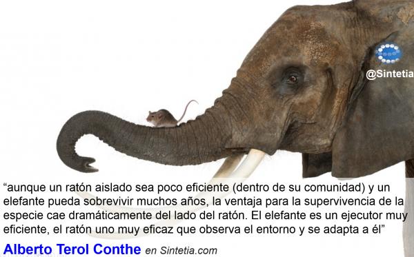 Eficiencia_Raton_Supervivencia_Sintetia