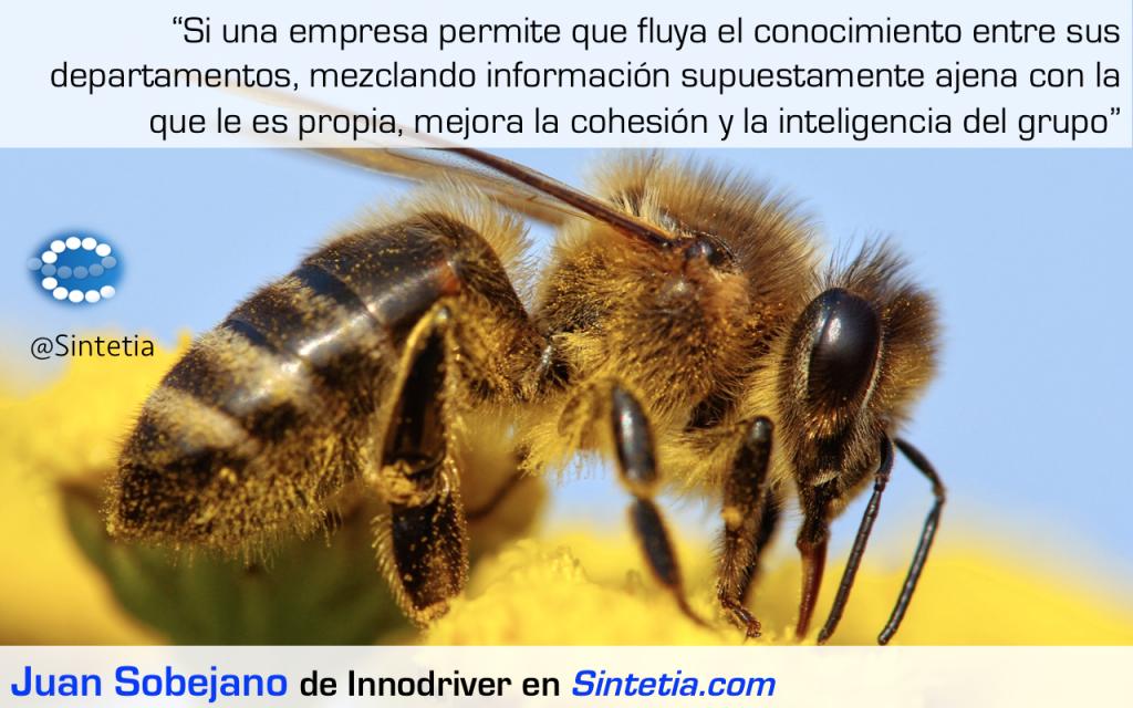 Polinizar_Innovación_Sintetia