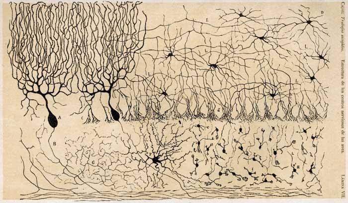 Ramon_Cajal_Dibujos