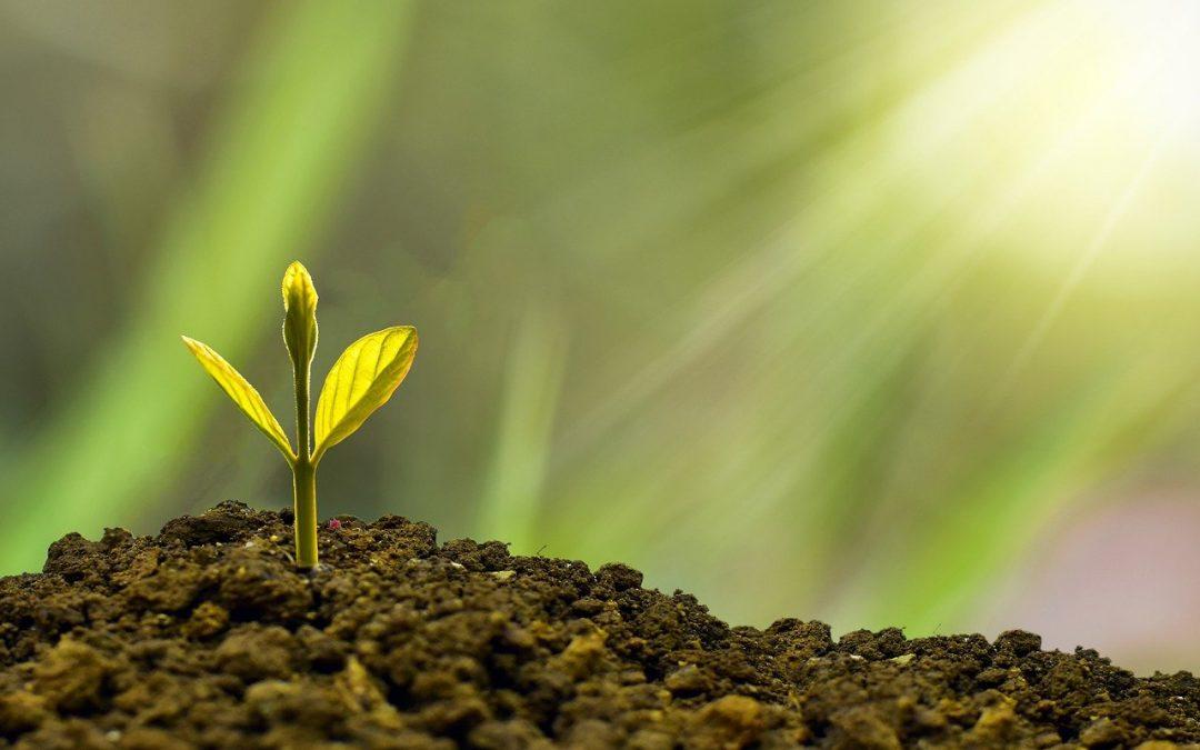 5 razones para apoyar una ley para fomentar el crecimiento y el clima empresarial y 5 mitos sobre emprender